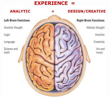 meet 3f861 73e99 L'asimmetria del cervello umano