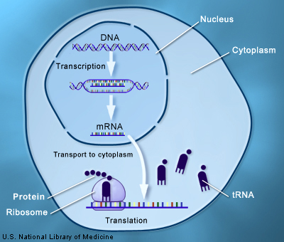 how to get rna dna licence